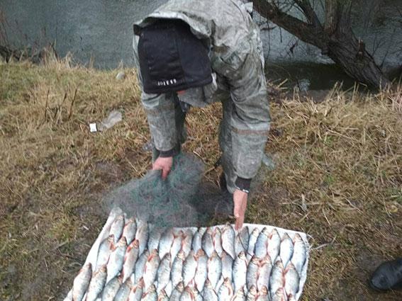 запреты на ловлю рыбы в азовском море