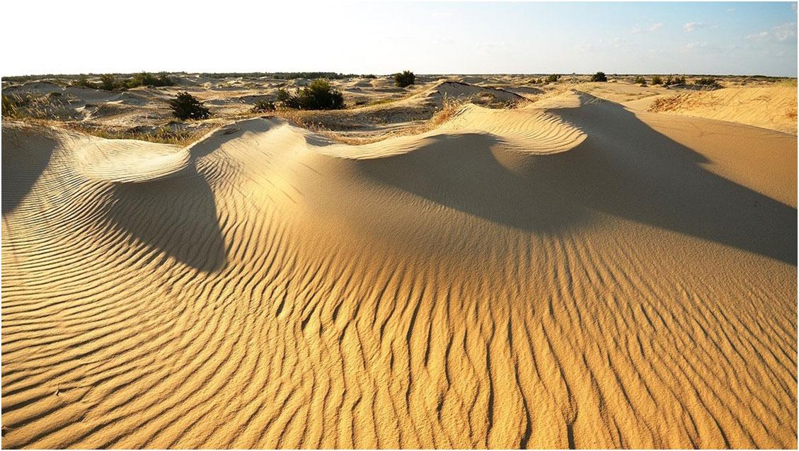 26_wild_desert_ultratrail_03.jpg